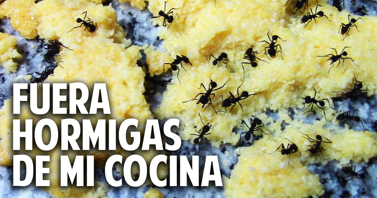 Como eliminar hormigas de la cocina aniquilamiento organico total sin venenos cosas del jardin - Como eliminar hormigas del jardin ...