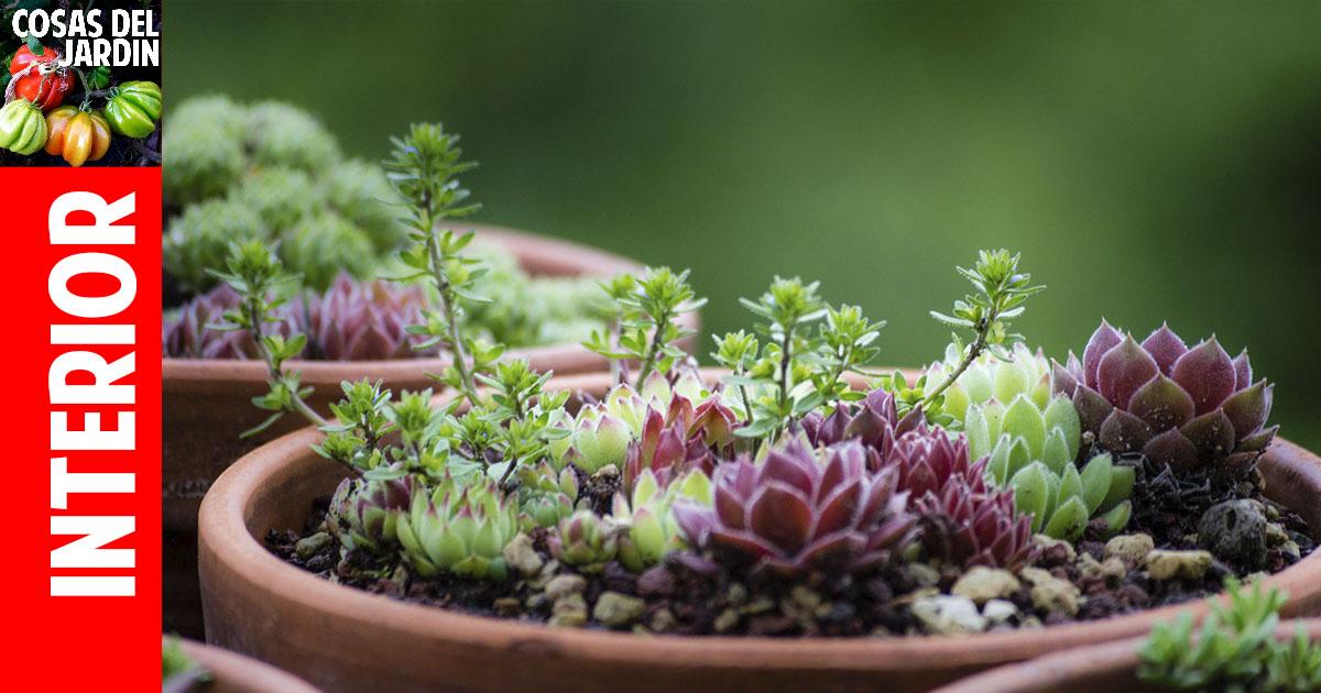 Cómo hacer para que tus suculentas crezcan sanas - Cosas del Jardin