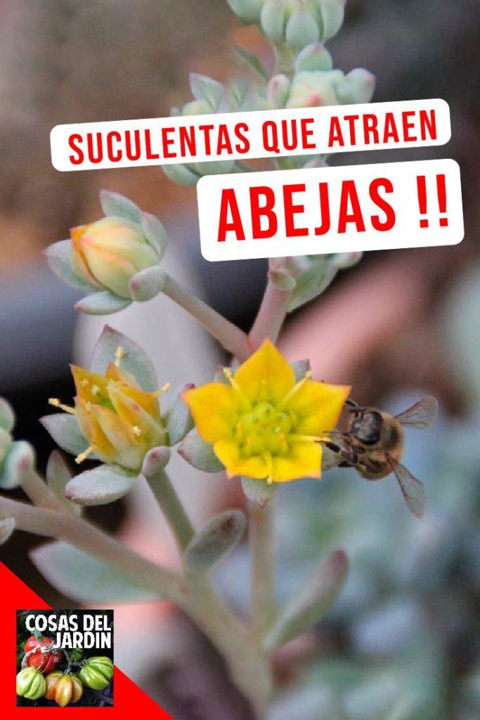 Puedes mantener un jardín de suculentas que atraiga polinizadores durante todo el año, si plantas las suculentas adecuadas para que siempre haya alguna en flor. #huerto #huertourbano #jardin #Jardineria #Suculentas #Cultivar